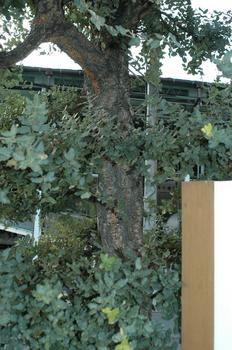 コルクの木.jpg